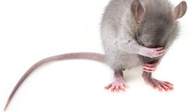pravidla pro kočky a myši křesťanské seznamky dobré nebo špatné